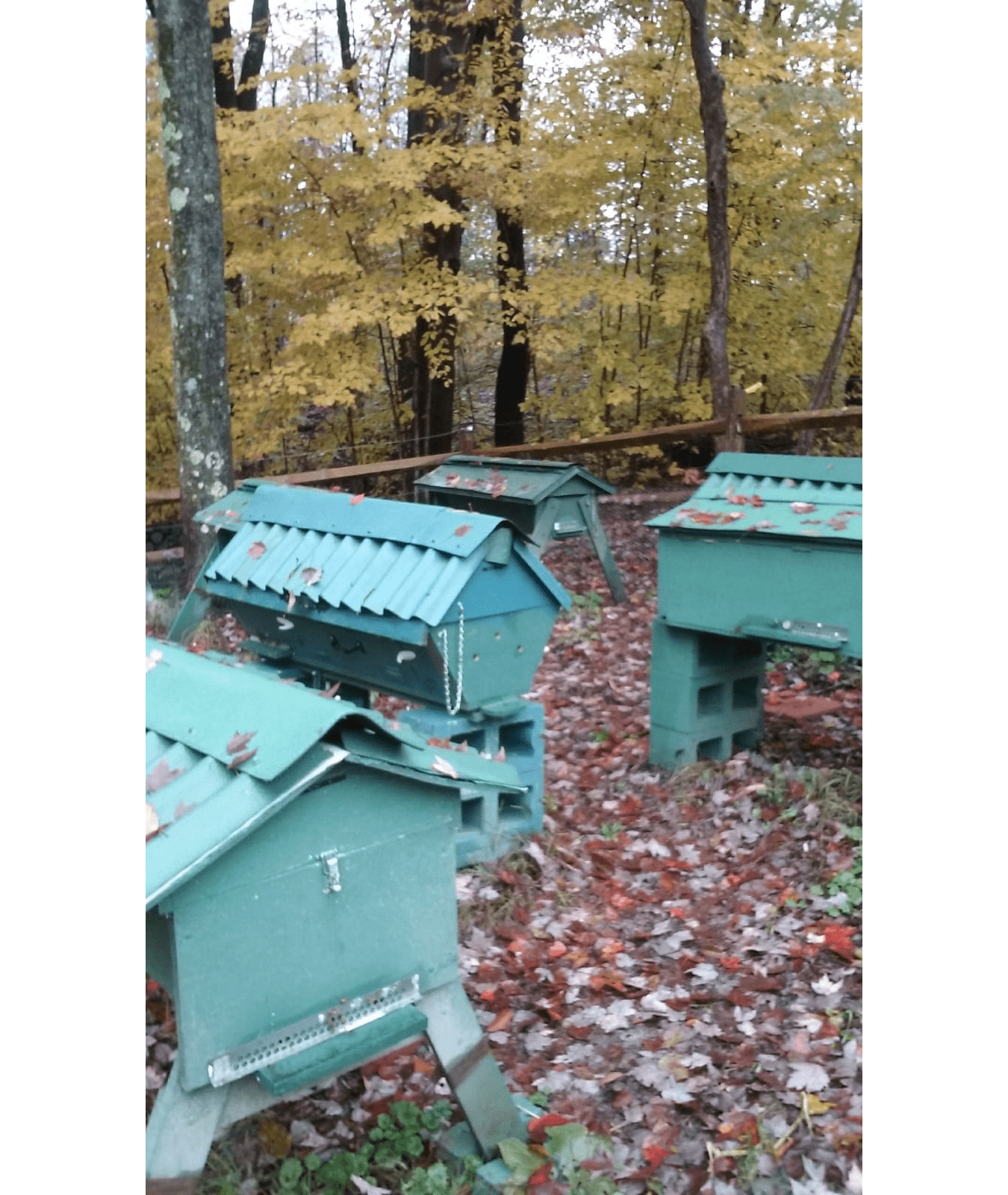 Bee Farm Bee Boxes